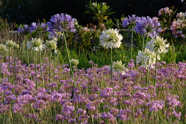 Garden design in Greece on the island of Paros mediterranean-landscape