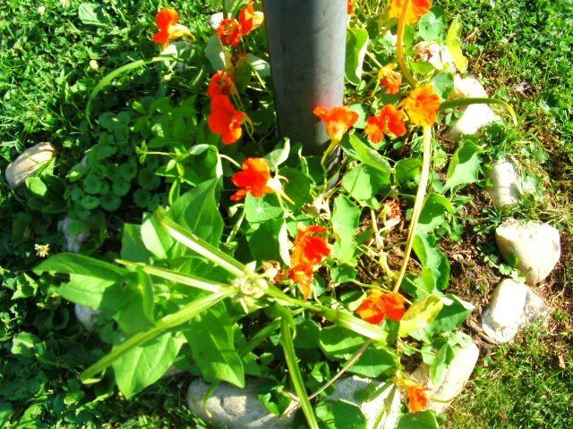 Bathroom remodeling bradenton - Garden Design Traditional Landscape Philadelphia