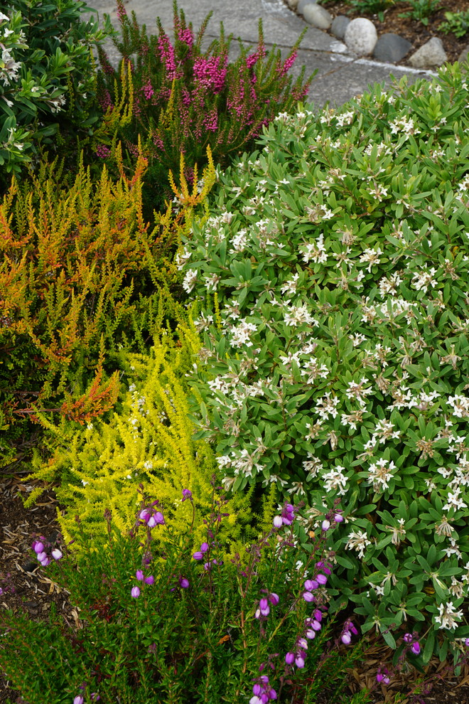 Design ideas for an eclectic landscaping in Seattle.