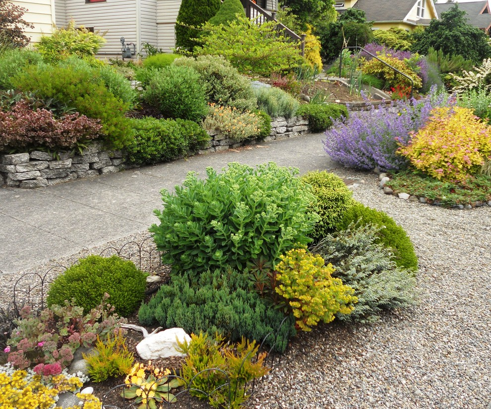 This is an example of a traditional full sun front yard gravel landscaping in Seattle.