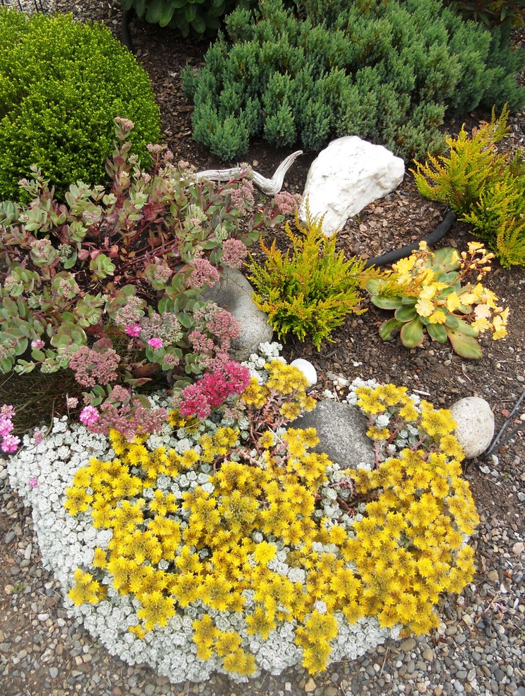 Photo of a traditional landscaping in Seattle.