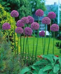 Garden Inspiration landscape