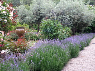 Herb Garden Essentials Grow Your Own Fragrant Lavender