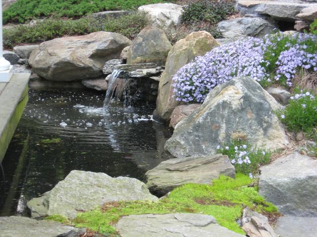 Garden pond waterfall and koi pond traditional for Koi waterfall