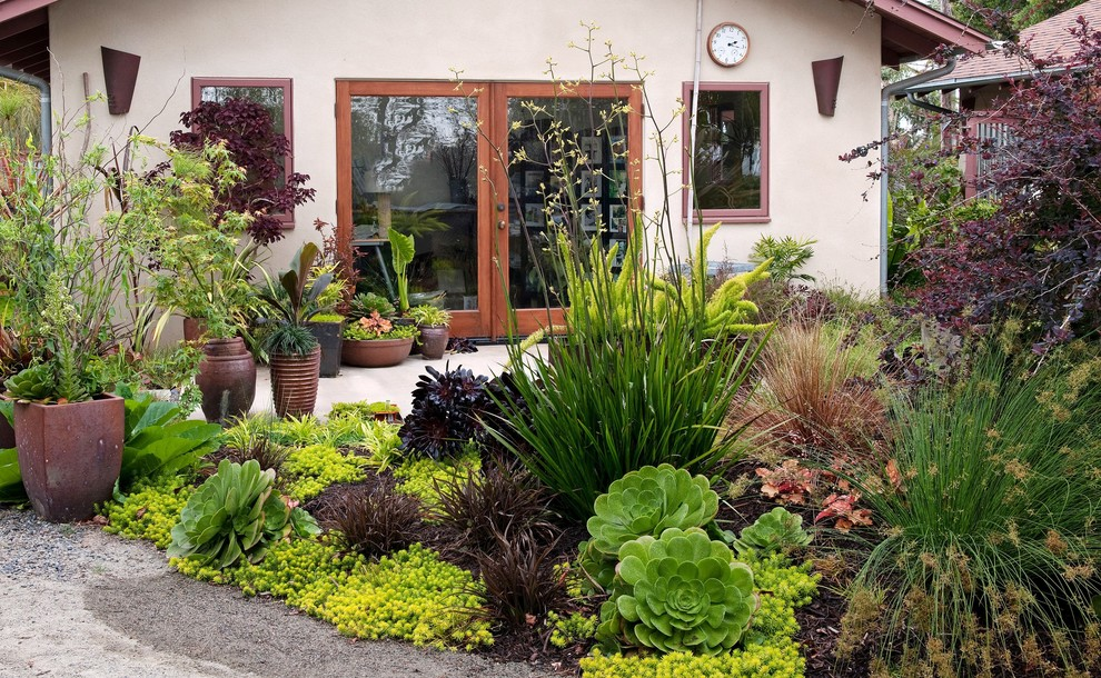 Design ideas for a contemporary backyard landscaping in San Diego.