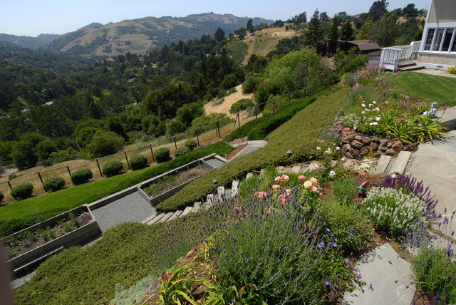 Landscaping Ideas For A Steep Front Yard : Gardens by lazar landscape traditional san francisco