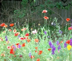 Texas Gardener's October Garden Checklist