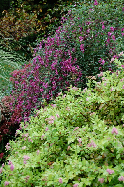 Gardens we have planted and love... traditional-landscape