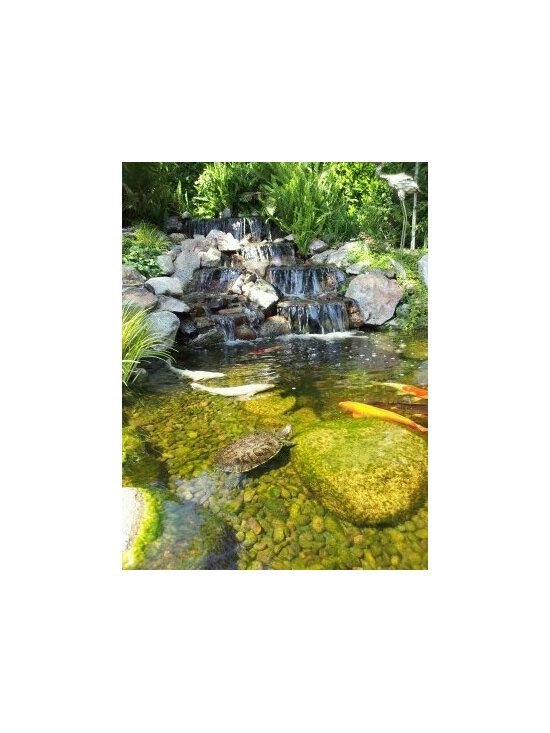 Turtle pond design ideas pictures remodel and decor for Salt in koi pond