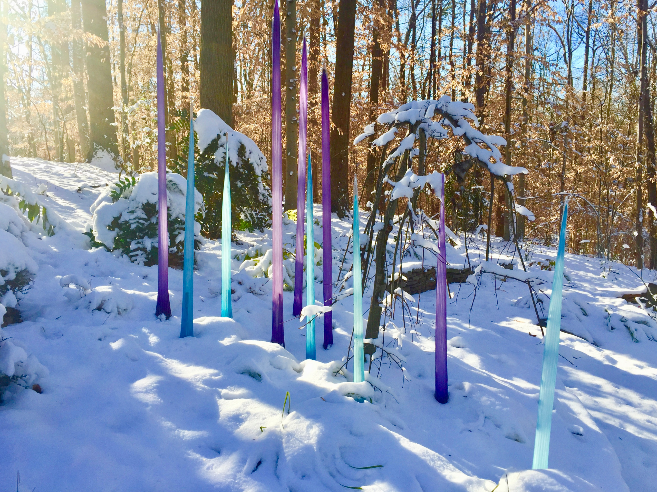 Glass spears in the snow.