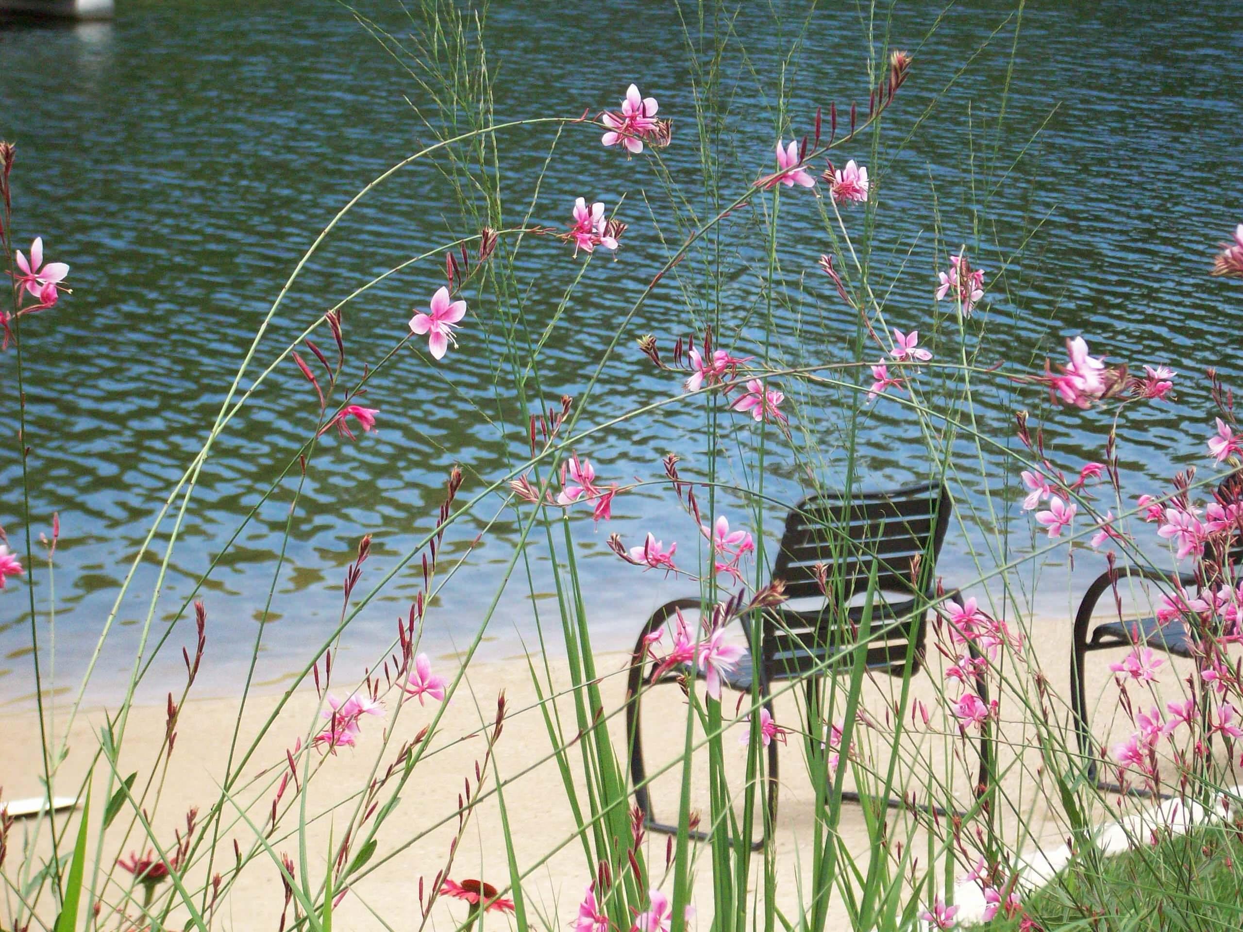 Contemporary Lakeside Patio - Glendale