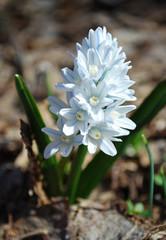Rocky Mountain Gardener's March Checklist