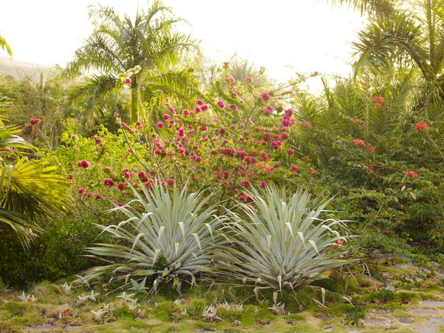 Golden Rock Inn, Nevis, West Indies tropical landscape