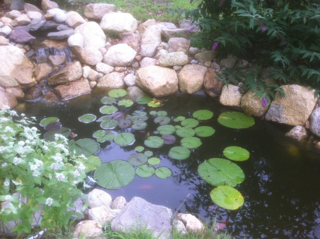 Goldfish pond waterfall build asian landscape How to build a goldfish pond