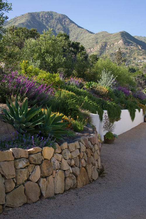 What type of plants overhang the retaining wall for Retaining wall plants landscaping