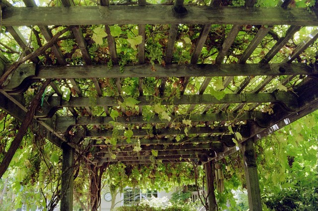 Backyard Vineyard Ideas : Grape Arbor  Overhead traditionallandscape