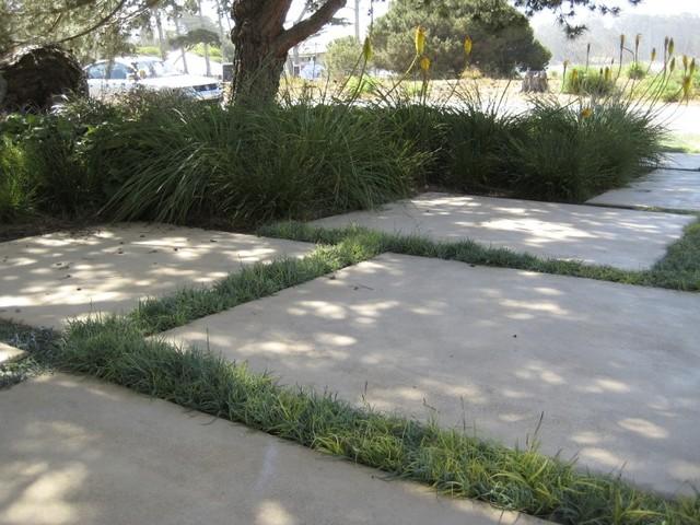 grass driveway eclectic-landscape