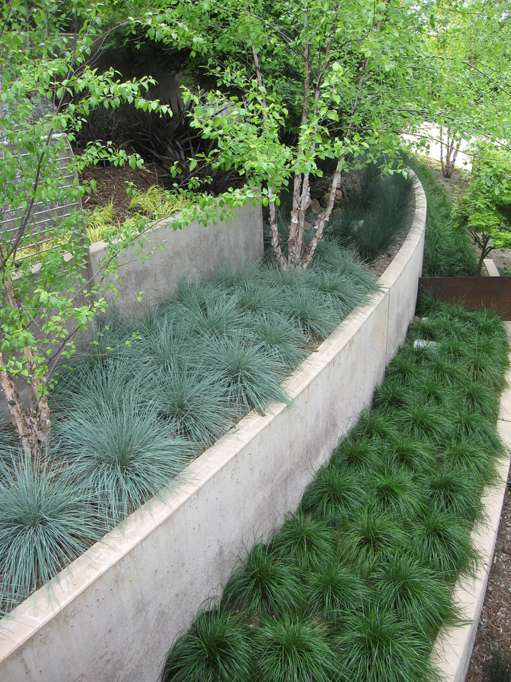 Design ideas for a contemporary retaining wall landscape in San Francisco.
