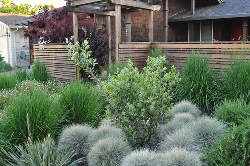 What type of ornamental grass is surrounding the middle for Front yard ornamental grasses