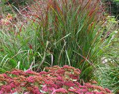 Great Design plant - September 2012 traditional-landscape