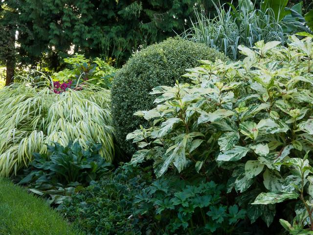Great Plant Combinations Landscape seattle by Le