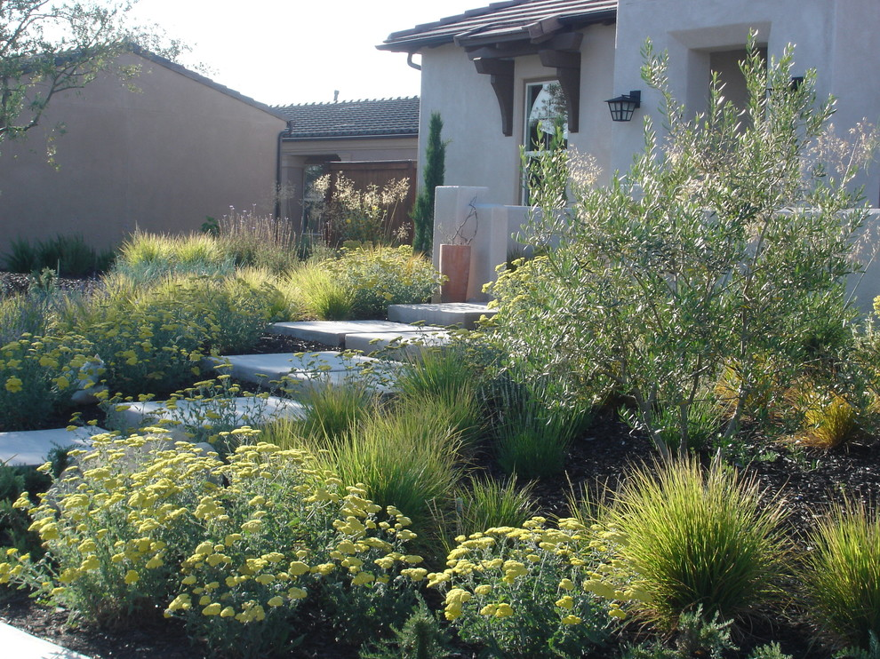 Design ideas for a contemporary front yard landscaping in San Luis Obispo.
