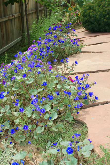 Ground covers on sloped wall
