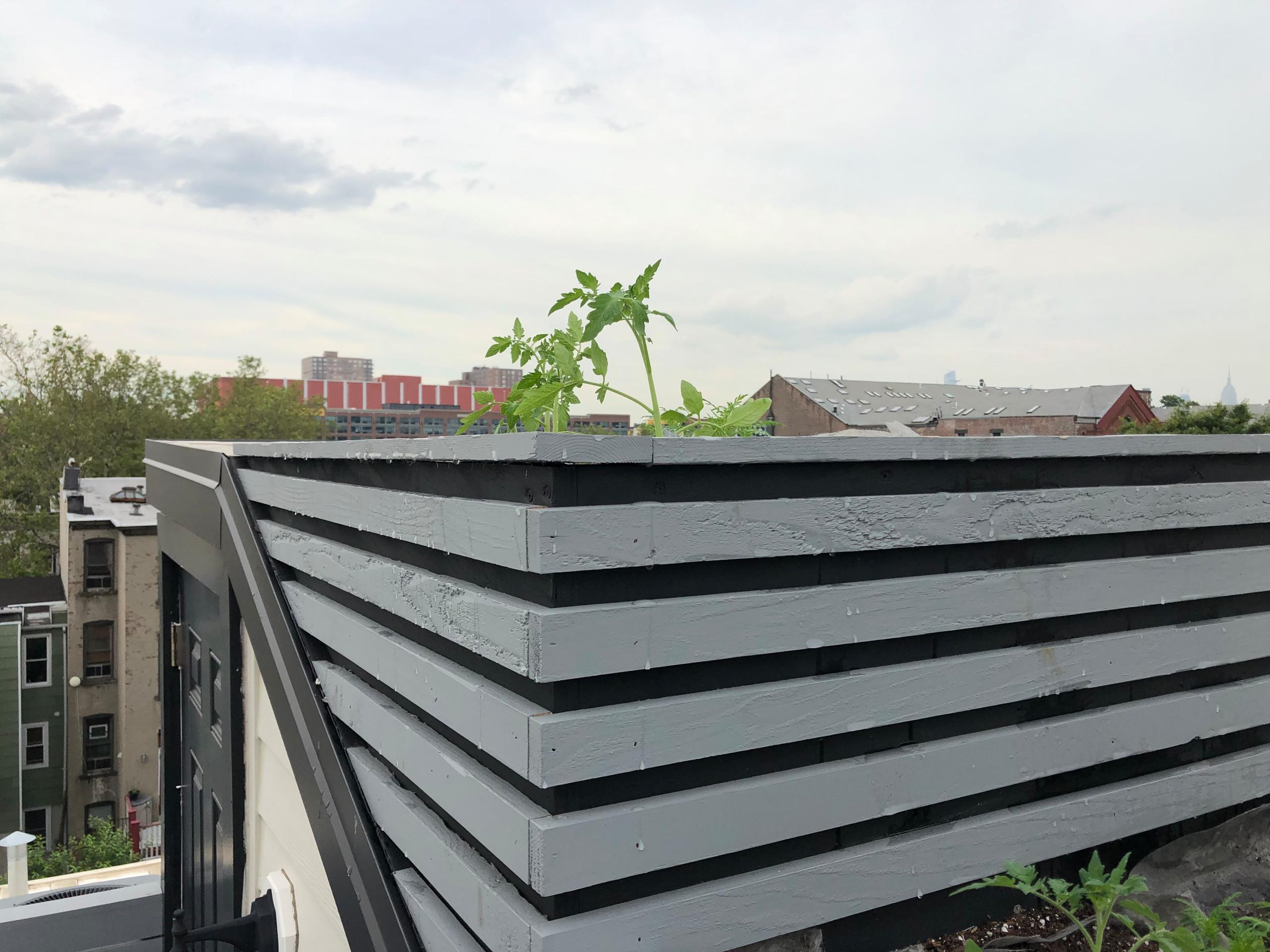 Grow your veggies