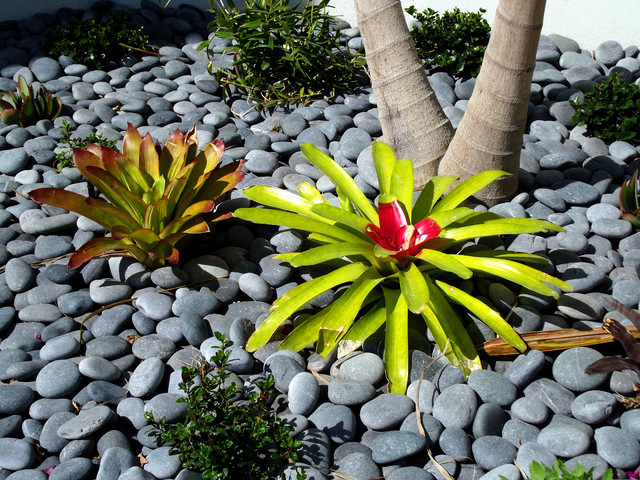 Hardscape Elements Tropical Landscape Tampa By