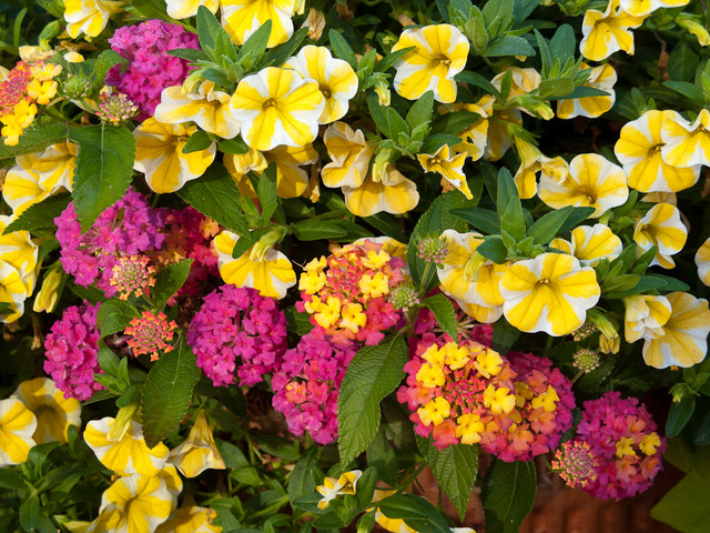 High performance, low maintenance annuals