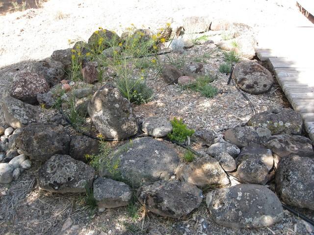 High Plains Desert Garden Landscape other metro by