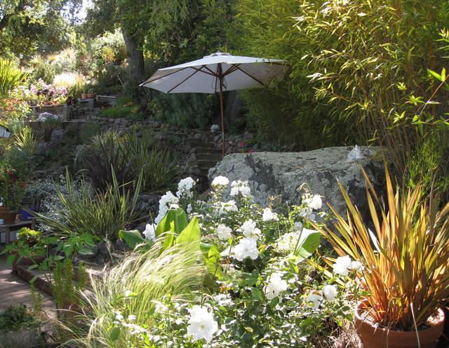Hillside Landscape Sanctuary In Northern California Mediterranean Landscape San Francisco