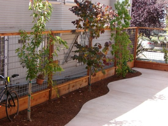 Hog Wire Fence Design Hog wire fence with screening trees workwithnaturefo