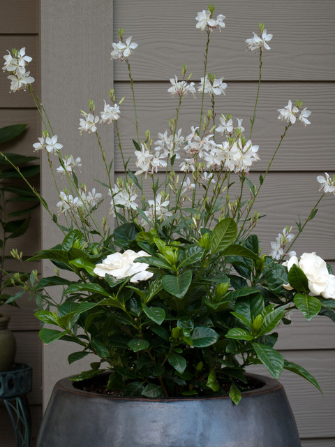 Holiday Container Gardens Traditional Landscape