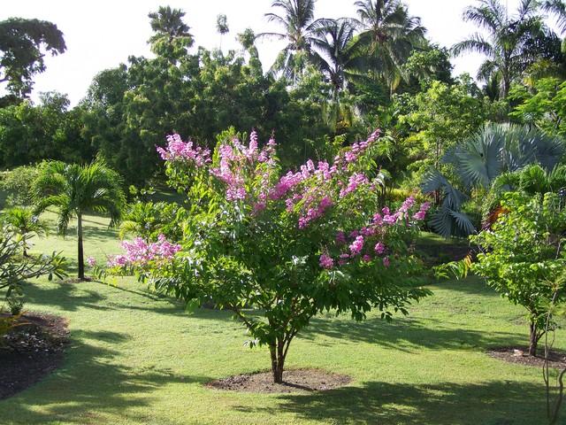 bajanianna tropical-landscape