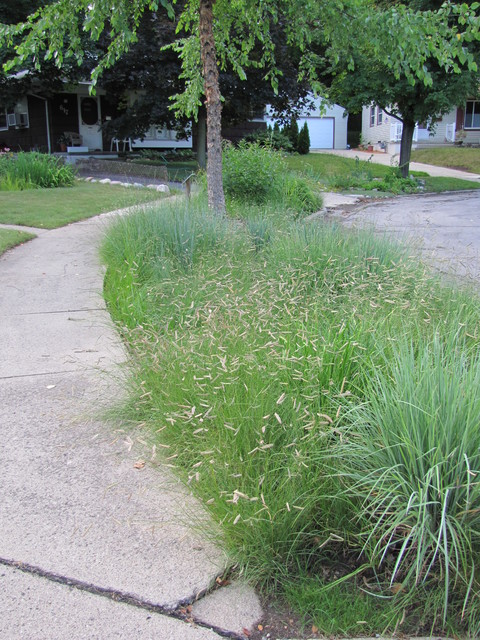 Home Landscape Using Only Native Plants Contemporary