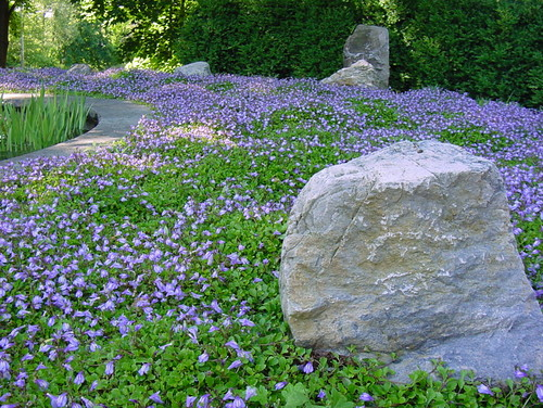 Image result for ground covers in landscaping