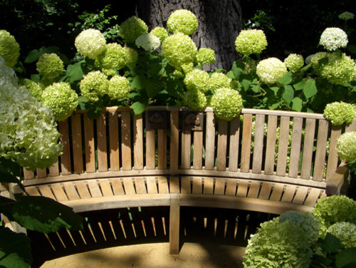 Hydrangea Bench traditional landscape
