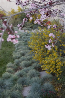 IdealMow Lawns: Carex Pansa