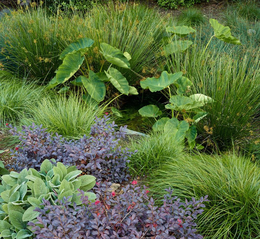 Idées déco pour un grand xéropaysage arrière moderne avec une entrée ou une allée de jardin et une exposition ensoleillée.