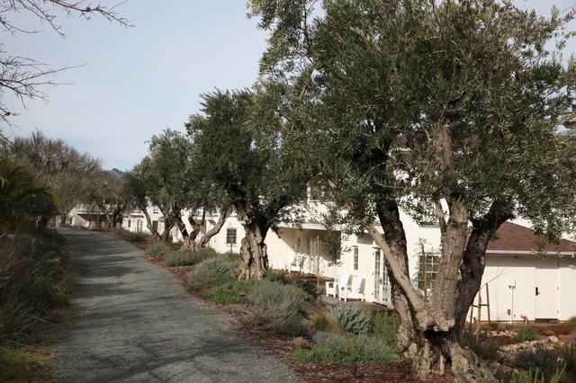 Indian Springs Resort mediterranean-landscape