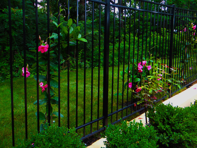 Iron Fence With Climbing Plants Traditional Garden Dc Metro