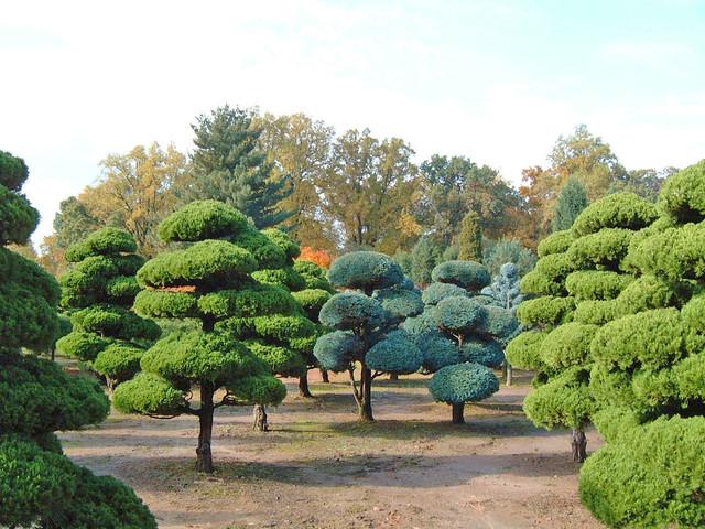 Nursery asian-landscape