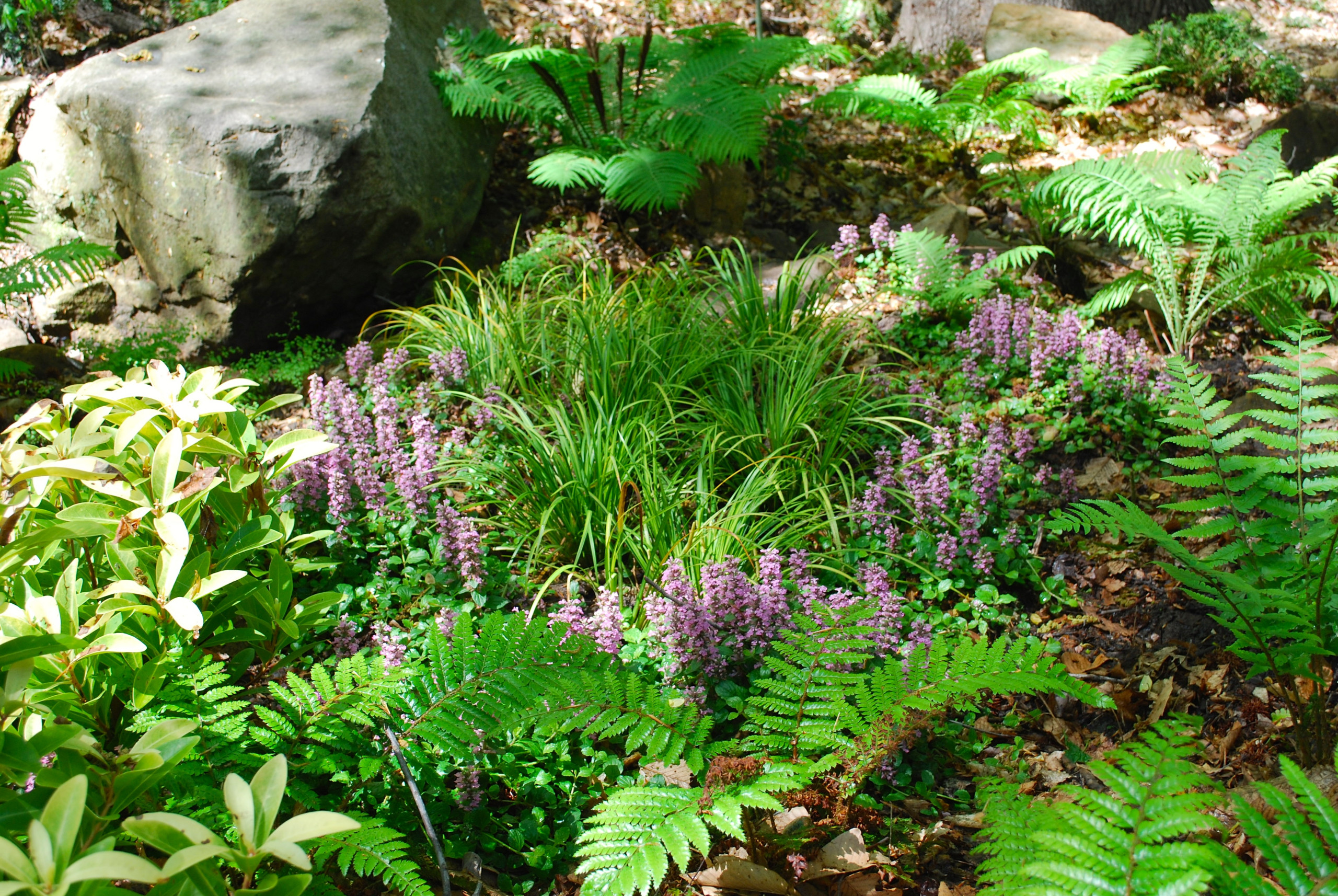 Japanese-inspired fern garden
