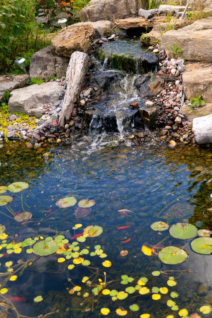 Jardin aquatique et bassin d 39 eau for Bassin aquatique jardin
