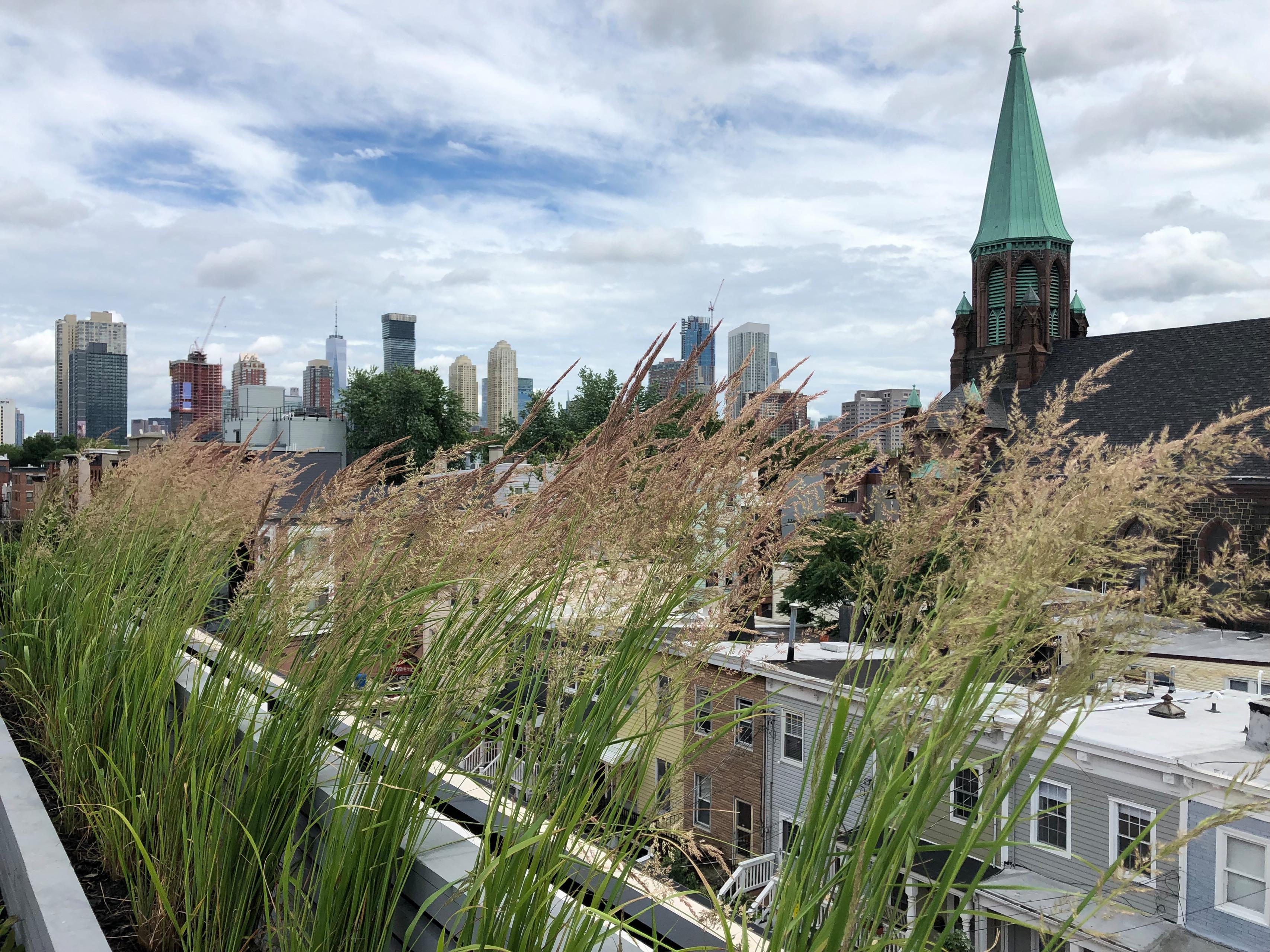 Jersey City Roof Garden
