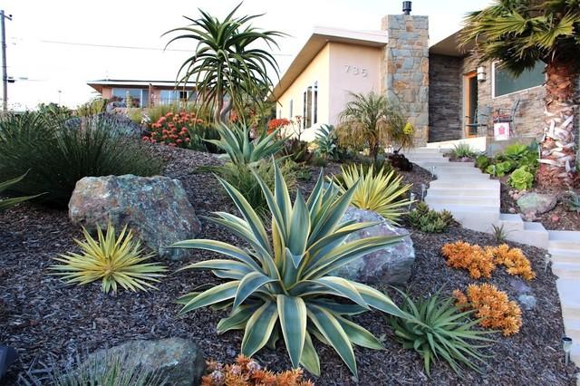 Jewel Toned Succulent Hillside Contemporary Landscape