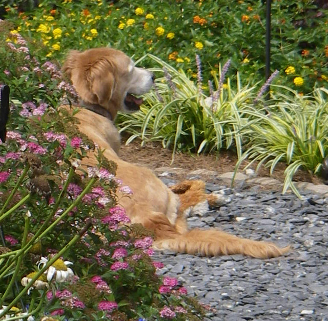 Cue the joyous soundtrack. These pet-friendly landscape and garden ...