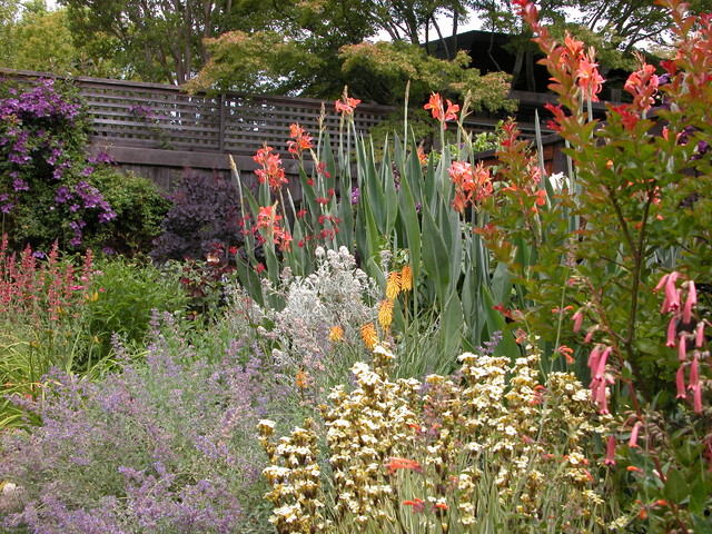 Kentfield Mixed Border Planting In Sun Contemporary Garden