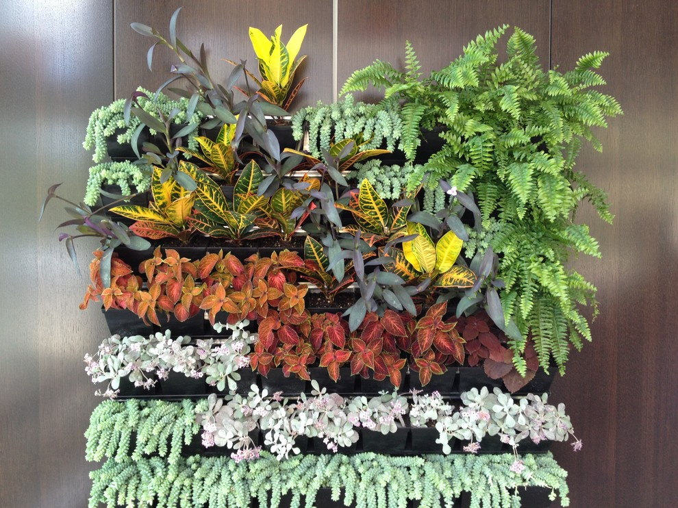 This is an example of a tropical landscaping in Vancouver.